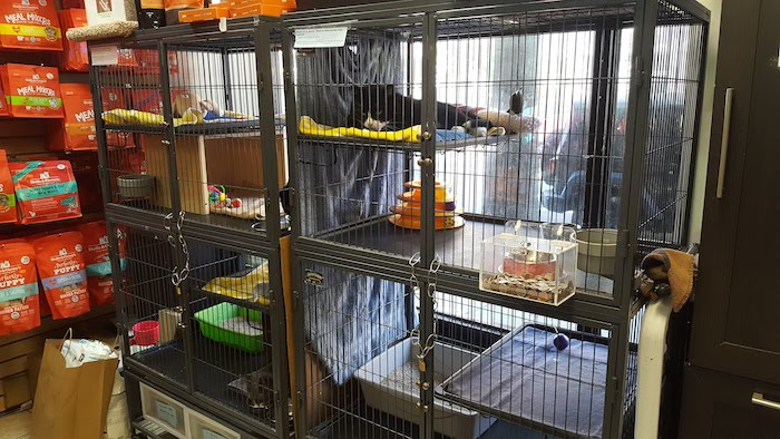 For The Love Of Cats: NYC Pet Employee Trail Blazes Cat Adoption