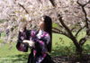 Member of the Yoshi Amao and Samurai Sword Soul poses by bloomed cherry blossom. (Photo Kadia Goba/Bklyner)