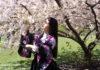 Member of the Yoshi Amao and Samurai Sword Soul poses by bloomed cherry blossom. (Photo Kadia Goba/Bklyner)