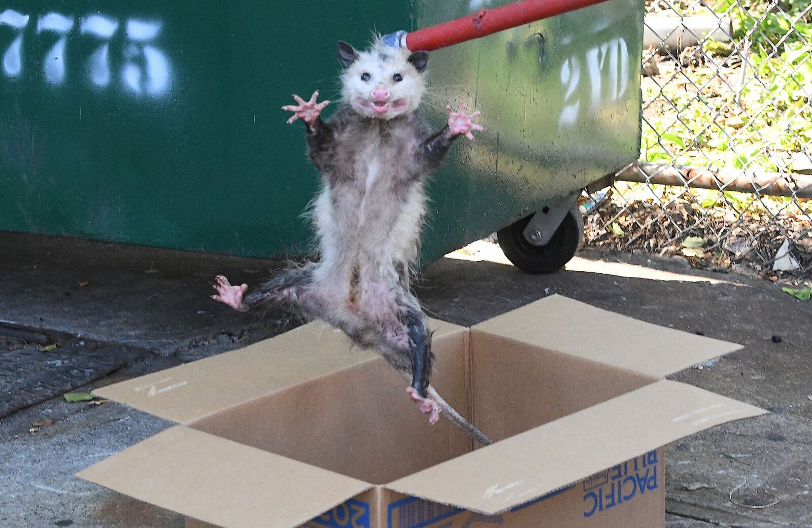 Playing Possum On Brooklyn Ave: Locals Help Stranded