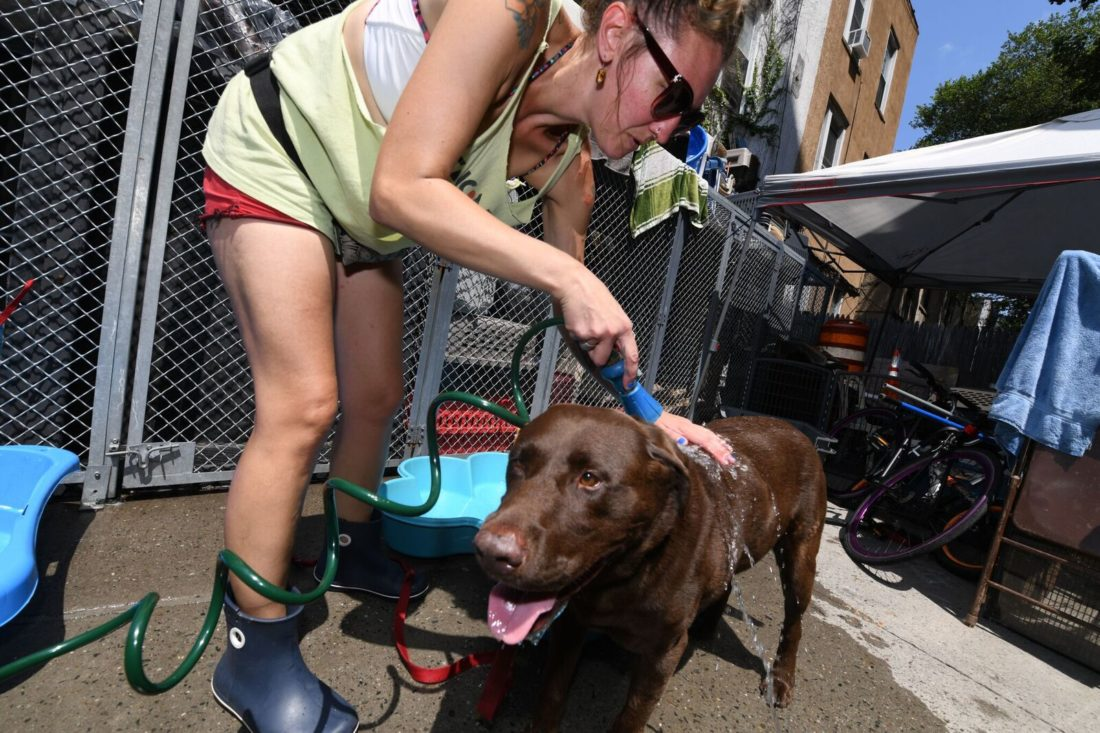 """The """"Great Dog Wash"""" Raises Funds To Fix Sean Casey Adoption Van"""