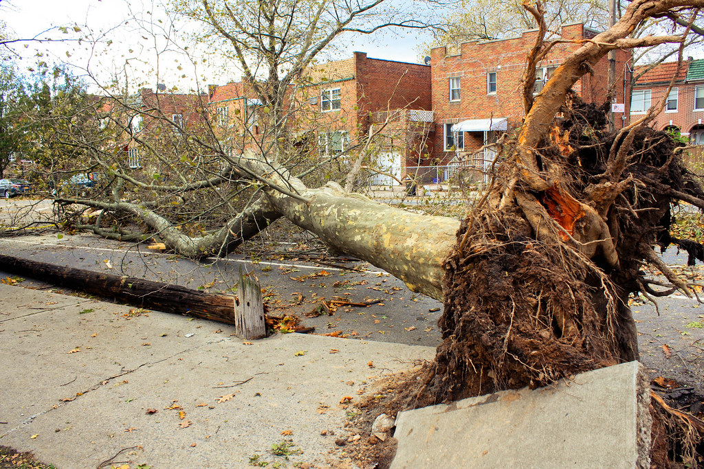Image result for brooklyn sandy trees