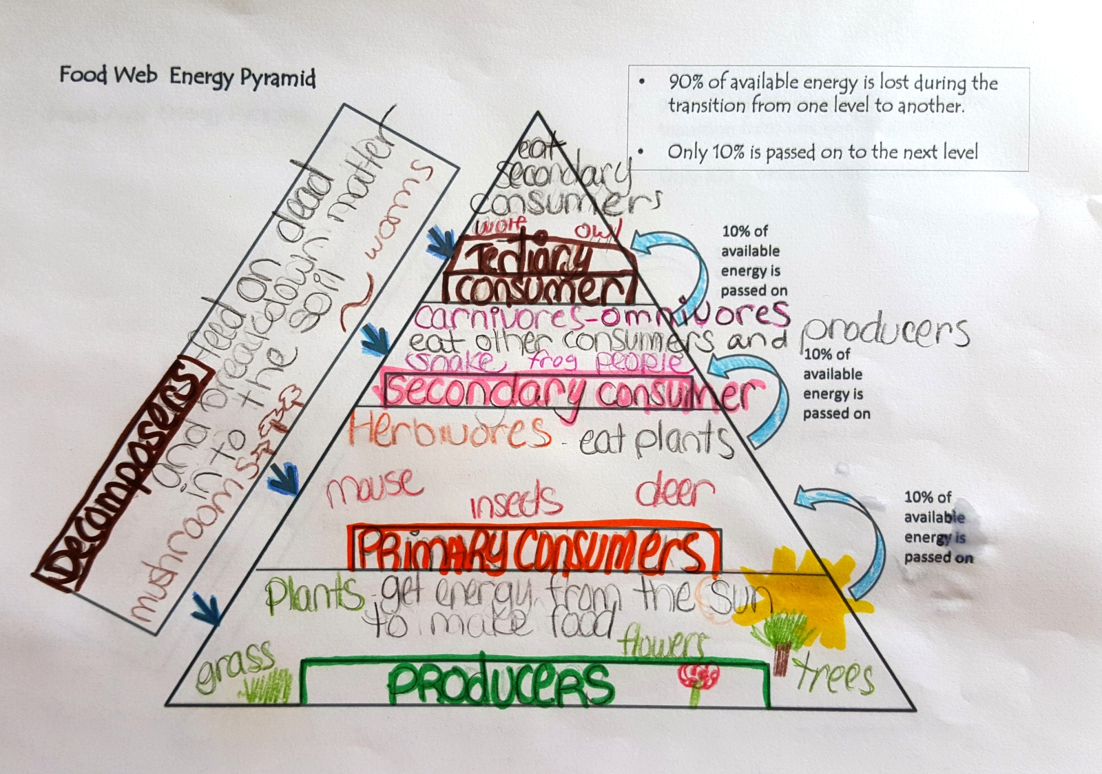 Student sample-Energy Pyramid