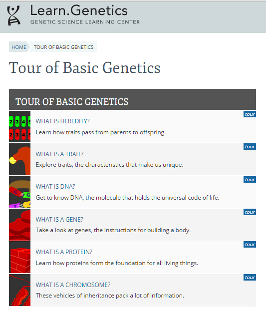 Lesson Genetics Tour of the Basics Web Quest – Genetics Basics Worksheet