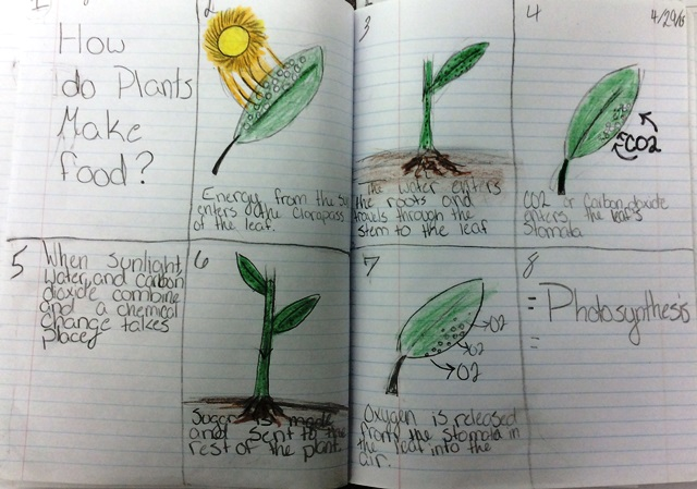 photosynthesis sequenced