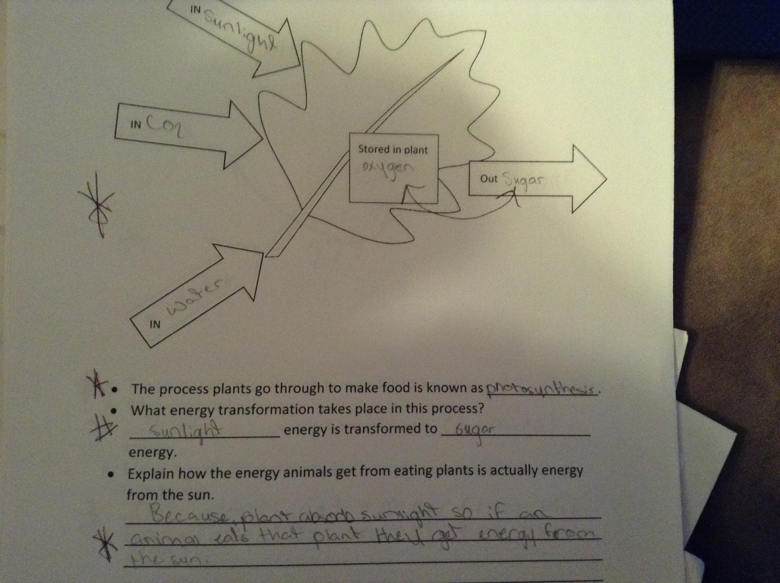 Fifth Grade Lesson Photosynthesis Betterlesson