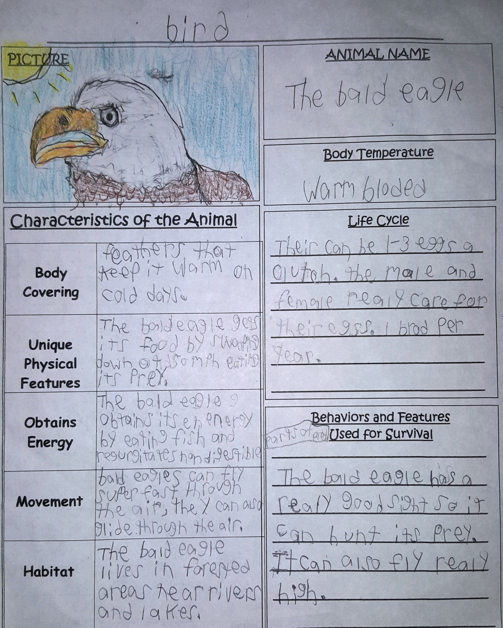 Eagle -student research