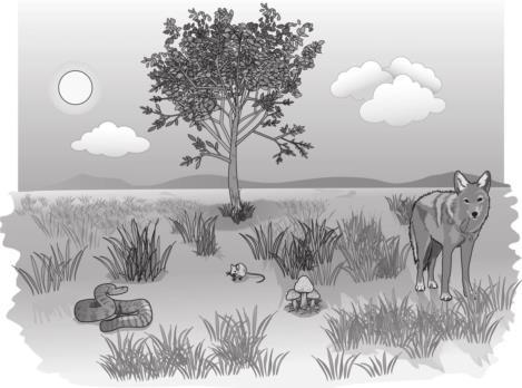 Prairie Ecosystem