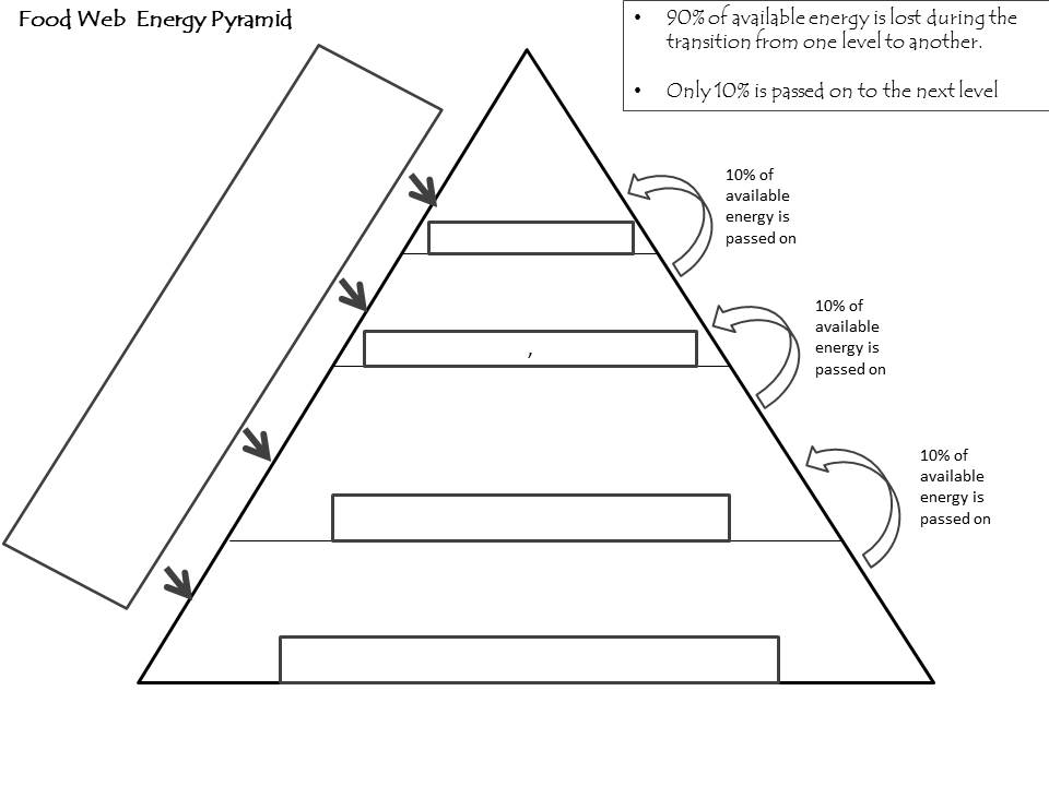 Worksheets Energy Pyramid Worksheet hand out a blank energy pyramid betterlesson pyramid