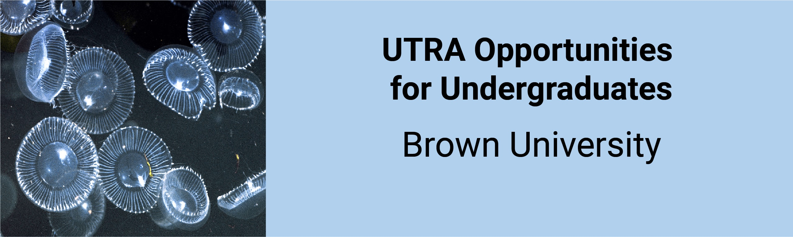 UTRA Opportunities for Undergraduates