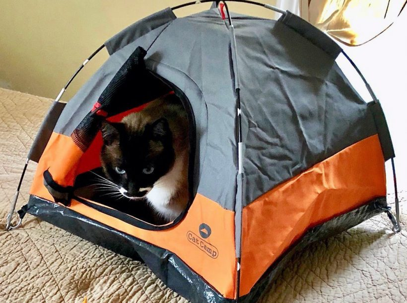 cat tent walmart, outdoor cat tent with tube, waterproof cat tent, cat tent bed, cat tent with tunnel, abo gear cat tent and tunnel, cat camp tent, outdoor cat tent and tunnel, New best product development, best product design, best industrial designers, best design companies, enthusiasts here are your links to look into: best, review, industrial design, product design website, medical product design, product design blog, futuristic product design, smart home product design, product design portfolios, cool products, best products, cool designs, best designs, awesome new, best new, awesome products, cool stuff, best technology, awesome pictures, awesome photos, new products, new technology, cool, cool tech, new tech, awesome, product design product, industrial design, design, best design, best companies, 3dmodeling, modern, minimalism, design studio