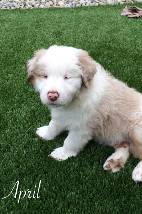 pet adoption near me