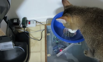 pet adoption articles: A brilliant cat feeder that makes your cat work for his meal