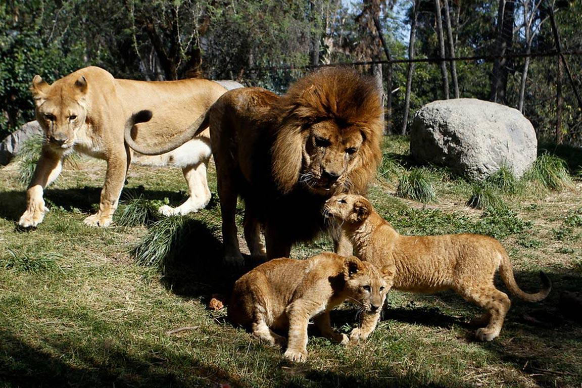 viajar a Santiago de Chile con niños: Zoologico de Buin - Avantrip Blog