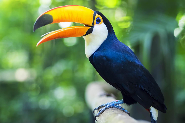 Al viajar a las cataratas del Iguazú, te recomendamos visitar el Parque Nacional de las Aves