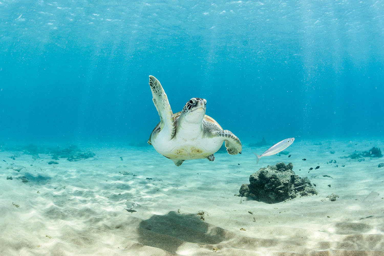 Andá a la parte norte de la isla, donde vas a encontrarimpresionantes rincones para hacer snorkell