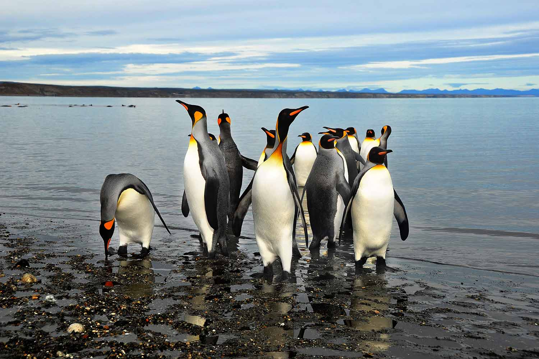 La Isla Pingüino es uno de los mayores atractivos de las navegaciones por el Canal de Beagle