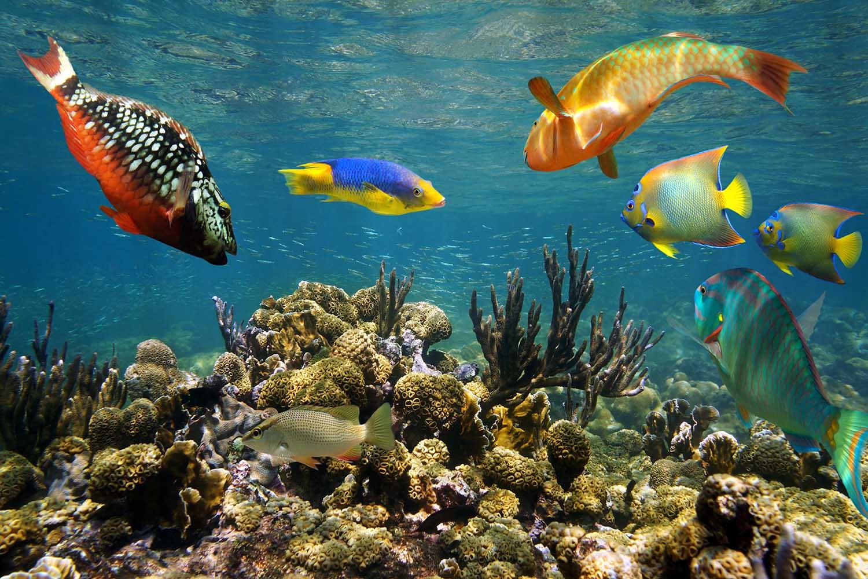 La Isla de San Andrés tiene una de las más grandes barreras de coral del Caribe, así que es ideal para snorkel y buceo