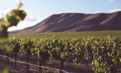 الرسوم الجمركية الصينية تغلق الباب أمام أكبر سوق لتصدير النبيذ الأسترالي