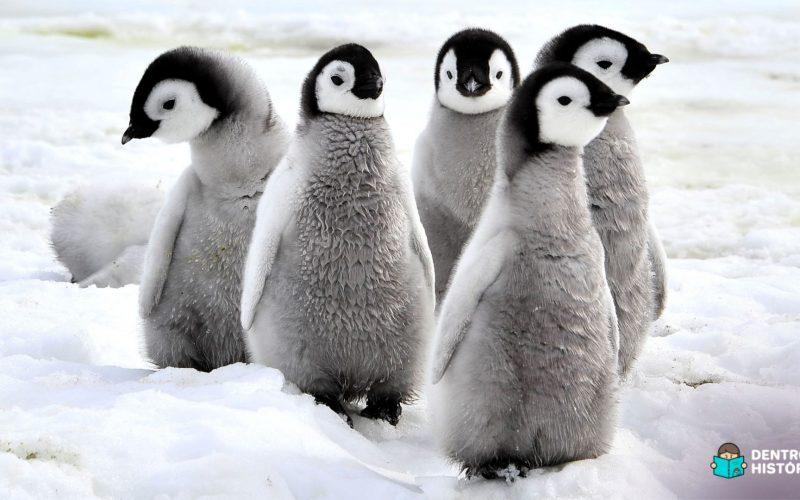Pinguins são animais que vivem no gelo