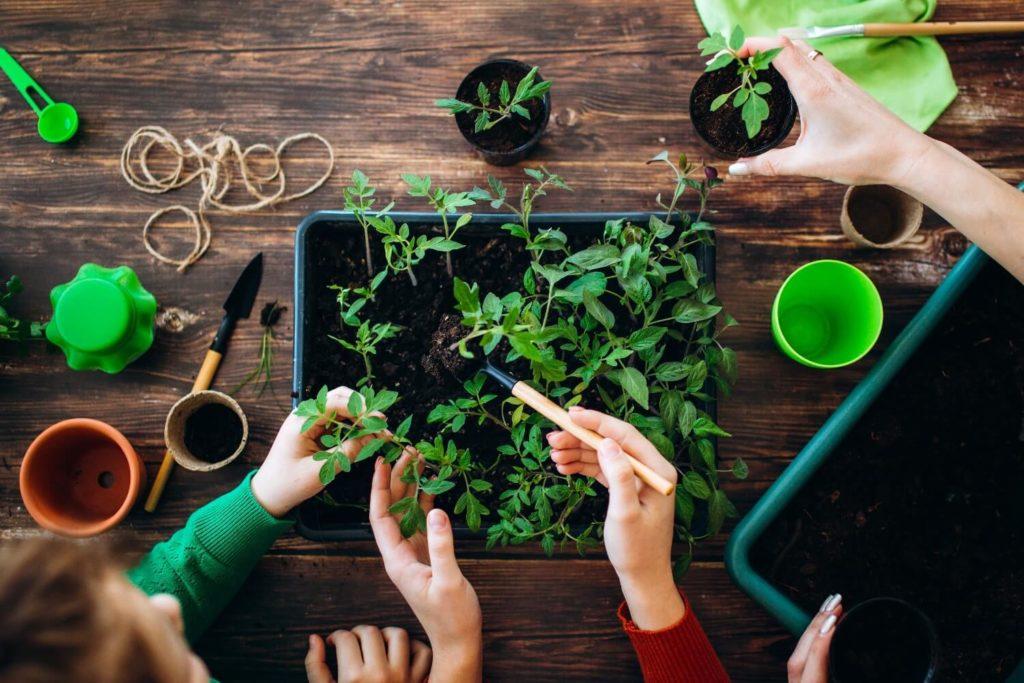 como fazer uma mini horta em casa