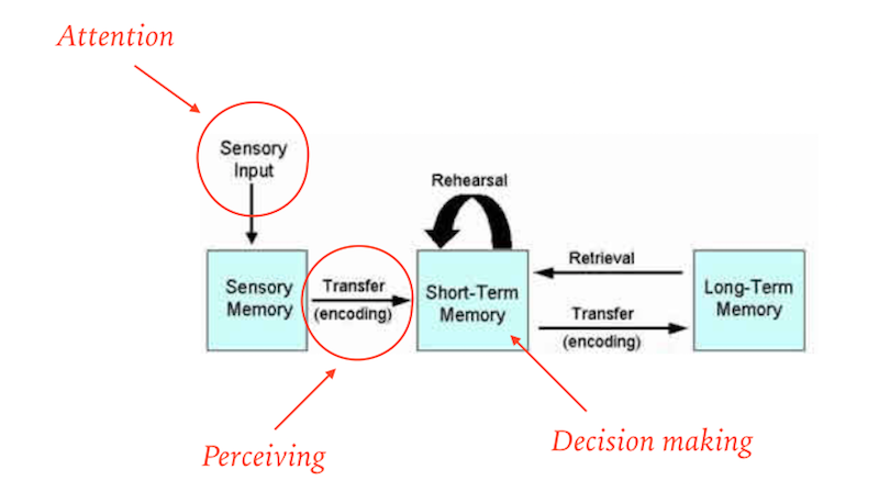 Cognitive science and design