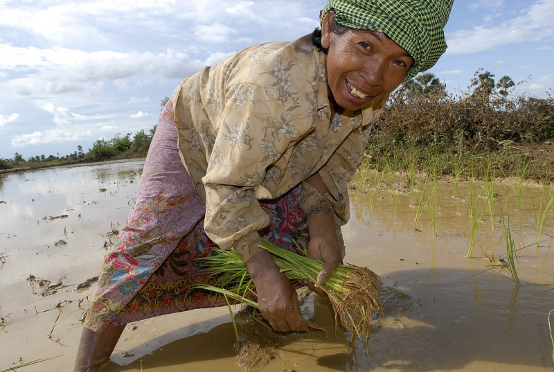 The system of rice intensification, or SRI, is an agircultural technique that improves the yields of farmers while using fewer seeds and less water. The method is improving the lives of more than 80,000 farmers in Cambodia. Photo by Isabelle Lesser/Oxfam America