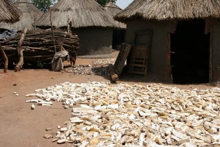Cassava dries in the sun in Kitgum, Uganda. Photo by Geoff Sayer/Oxfam