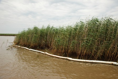 Despite the oils containment booms, the marshes along the coast of Louisiana are suffering. Photo by Audra Melton/Oxfam America