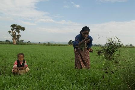 Demitu Gurmessa weeds her field. Photo by Eva-Lotta Jansson/Oxfam America