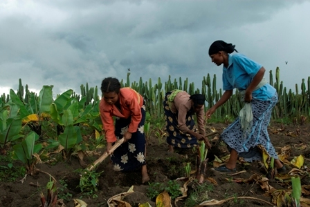 Members of the Jalala Women's Association work in one of their fields. Photo by Eva-Lotta Jansson/Oxfam America