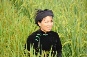 Vuong Hoang Kim was one of the first farmers in her commune to commit to growing SRI rice--and she is pleased with the results. Photo by Chris Hufstader/Oxfamamerica