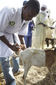 Oxfam is supporting animal feeding and health care to enable farmers and herders to weather the lean season. Photo by Andy Hall/Oxfam.