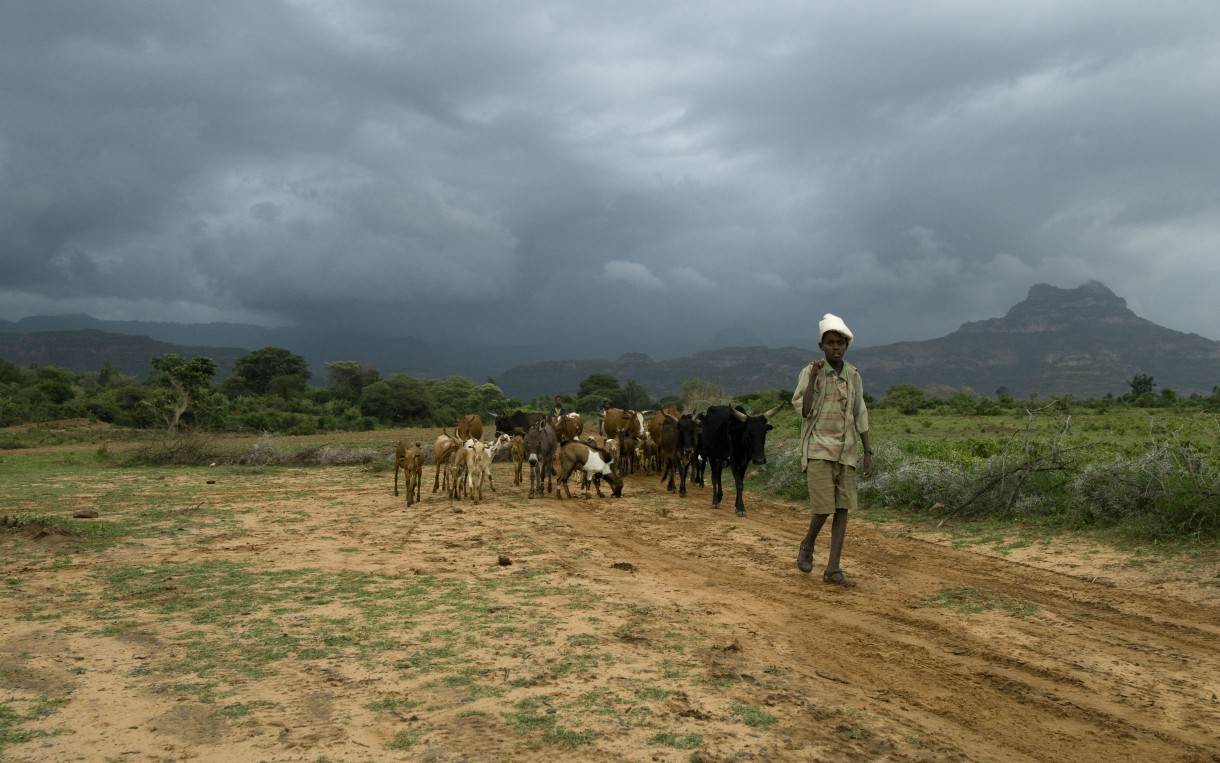 A herder with his animals in Tigray, Ethiopia. Oxfam is working in this region to help farmers adapt to changes in rainfall. Photo: Eva-Lotta Jansson/Oxfam America