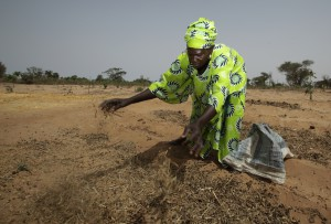 Sokhna Kane scatters fertilizer on her fields in Senegal.  Agroecological methods outperform chemical fertilizers in increasing food production.  Photo: Rebecca Blackwell/Oxfam America