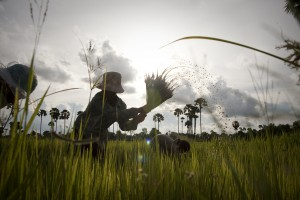 Cambodian farmers in rice fields.  Photo by Patrick Brown/Oxfam America.