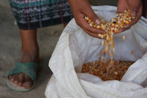 Ethanol produced from corn is contributing to high corn prices. Photo by James Rodriguez/Oxfam America.