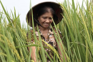 Hoang Thi Lien at her system of rice intensification (SRI) farm in Vietnam. Photo by Chau Doan/Oxfam America.