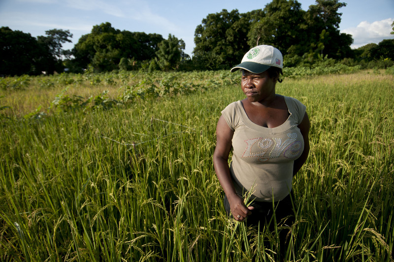 Haitian agriculture pays high price for sins against the ... |Haiti Farming