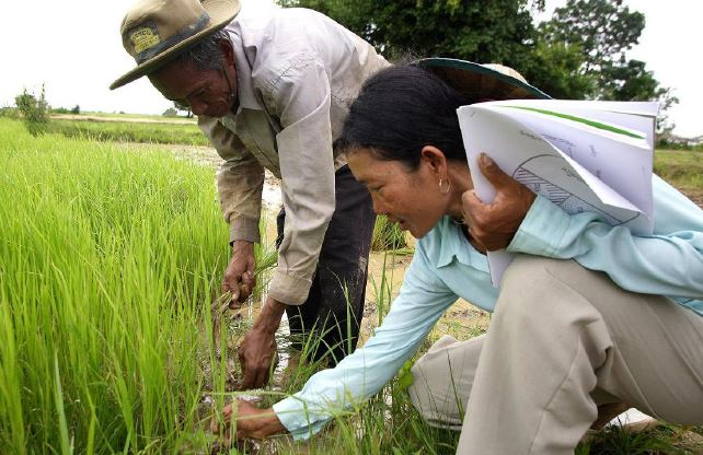 Ms. Yorn Yee (right) offers guidance and support to her fellow farmers in Cambodia. Mr. Neang Veach (left) learns more about the System of Rice Intensification (SRI) agricultural system. Photo: Jim Holmes / Oxfam