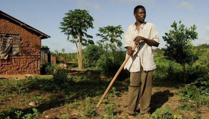 Hamisi Abdalla Rubalati grows maize, cassava and other vegetables on his land in Kisarawe District, Tanzania (2008). Like many other developing nations, Tanzania has seen large-scale foreign investment in agriculture in recent years. Photo: Aubrey Wade / Oxfam.
