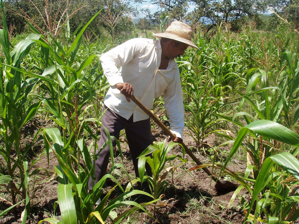 Small-scale farmers are responsible for a significant portion of Colombia's agricultural production and constitute 12 percent of households in the country. Photo by Oxfam staff in Colombia.