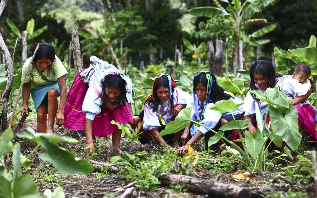 Wearing traditional Kichwa dress, women work together to tend the crops in their traditional garden. Photo: Percy Ramirez/ Oxfam America