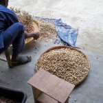 Peanuts being sorted before roasting in Haiti. (Photo: Cory Flanagin)