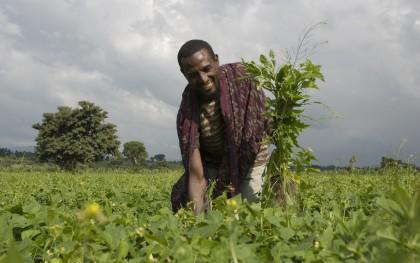 Kasim Wako, 30, in his green (haricot) beans field, in the Alelu Ilu Kebele, in the Shashamene district of the West Arsi zone of Ethiopia. Photo: Eva-Lotta Jansson / Oxfam America