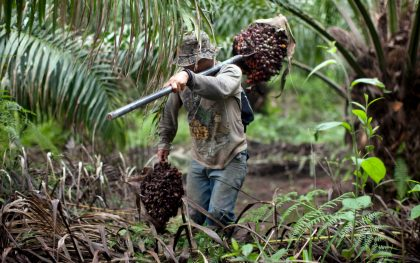 Latin American countries are quickly becoming leading producers and exporters of palm oil, but at what cost? (AP Photo/Rodrigo Abd)