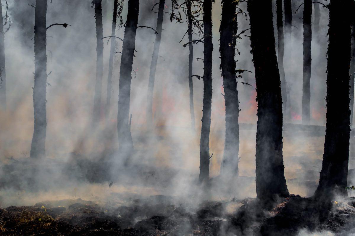 Trees burning with smoke in bushfire