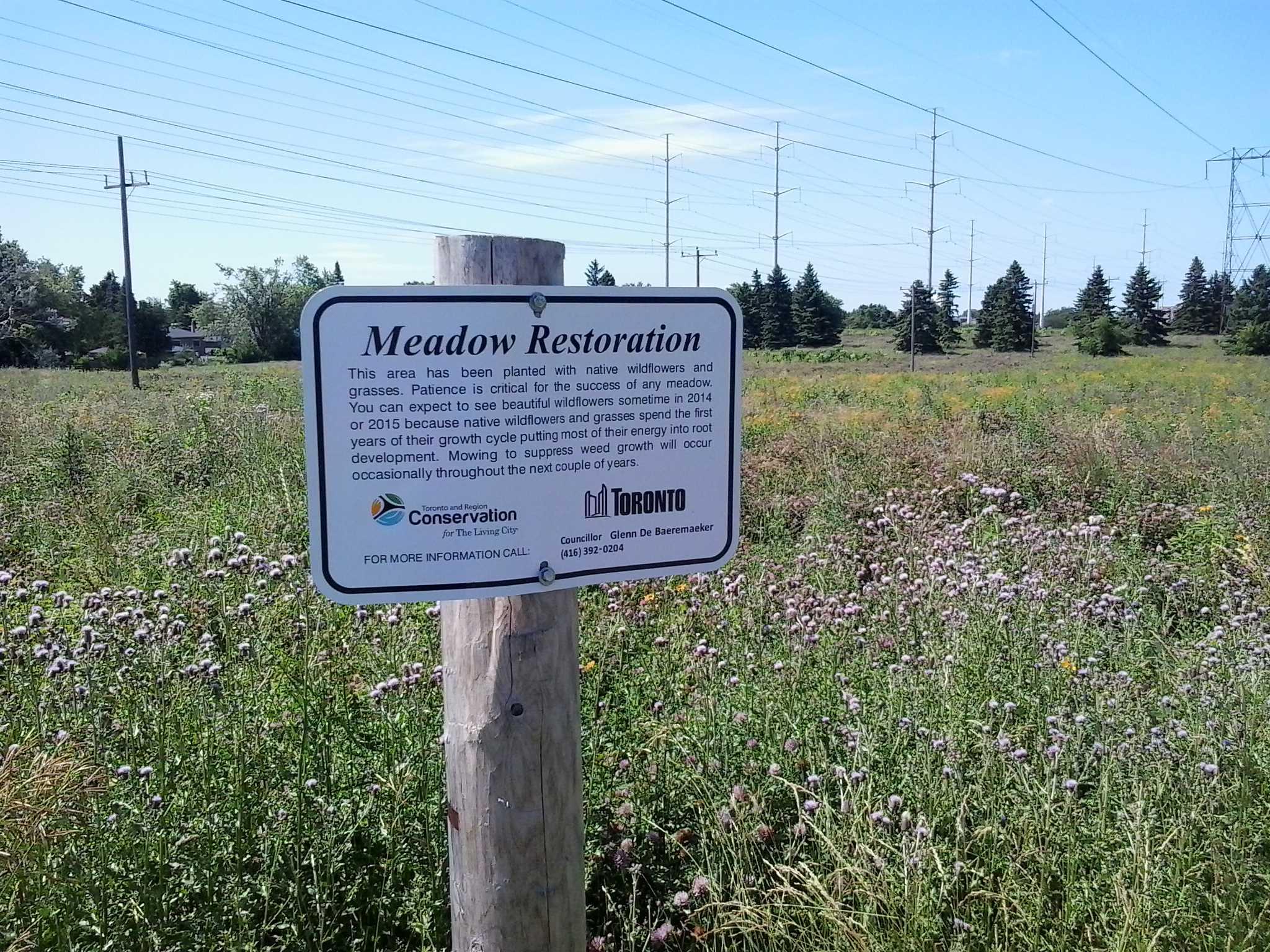Meadows of Wildflowers