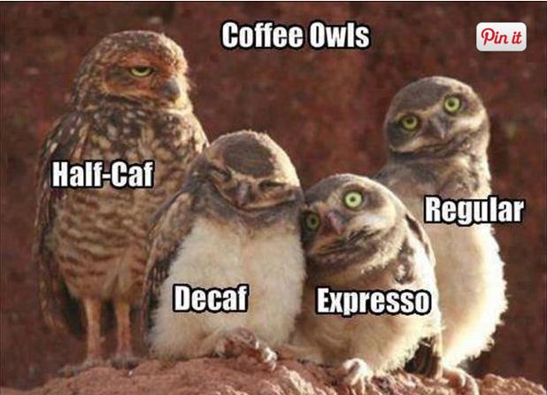 coffee-owls