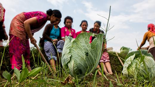 Beautiful ladies of Panauti farming